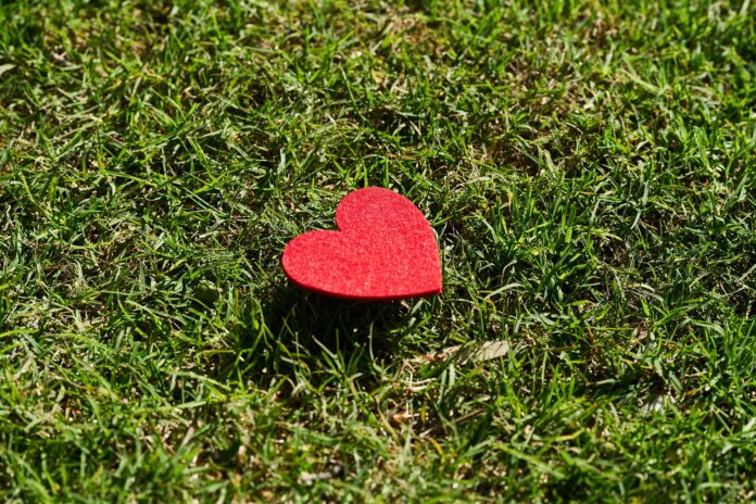Heart on grass, for February 2021 wrap up post